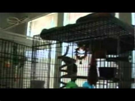 parrot singing heavy metal youtube