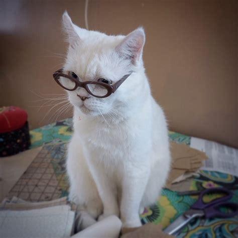 1001 lustige katzenbilder und katzenspr 252 che