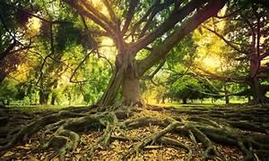 Baum Am Wasser : das kosystem der b ume massivmoebel24 blog ~ A.2002-acura-tl-radio.info Haus und Dekorationen
