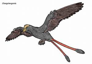 1000 Images About Prehistoric Birds On Pinterest