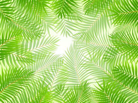 tropical vectors  vector    vector