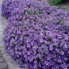 low growing perennials for shade 1000 images about rock gardens ground covers on pinterest perennials rock garden plants
