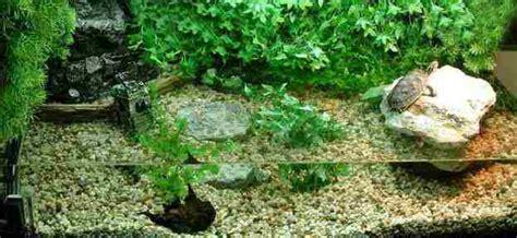 wie warm muss ein aquarium sein wie sollte ein geeignetes aquarium f 252 r wasserschildkr 246 ten aussehen
