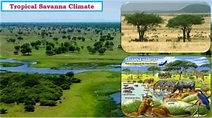 Savanna Climate (Tropical Wet Dry Climate) | PMF IAS