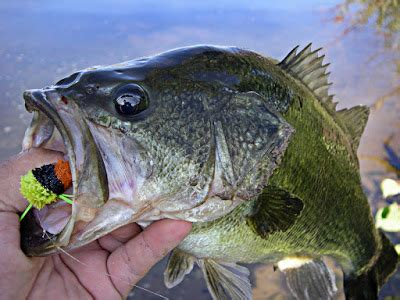 largemouth bass fishing package fish elevated utah