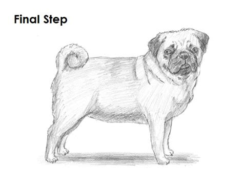 draw  dog pug video step  step pictures