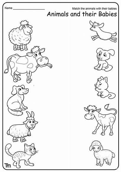 Farm Worksheets Animals Animal Babies Kindergarten Preschool