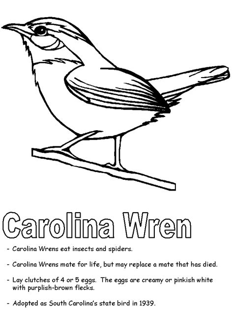 carolina wren coloring page bird coloring pages south