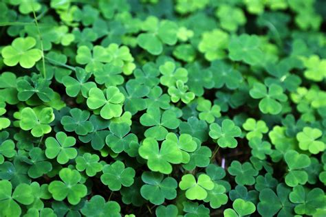 Check spelling or type a new query. Irish Green: The Various Colors of St. Patrick's Day