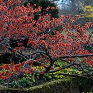 Buchsbaum Rund Schneiden : buchsbaum schneiden zeitpunkt hilfsmittel formen plantura ~ Frokenaadalensverden.com Haus und Dekorationen