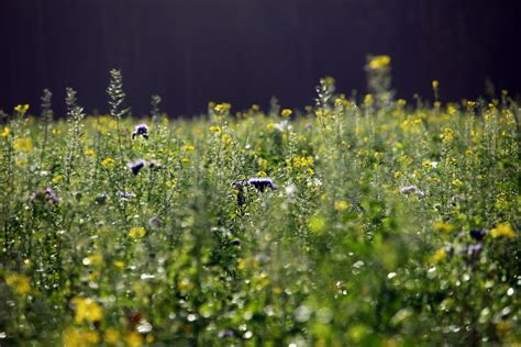 images nature field lawn meadow prairie