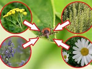 Welche Pflanzen Gegen Wespen : pflanzen gegen zecken ~ Lizthompson.info Haus und Dekorationen