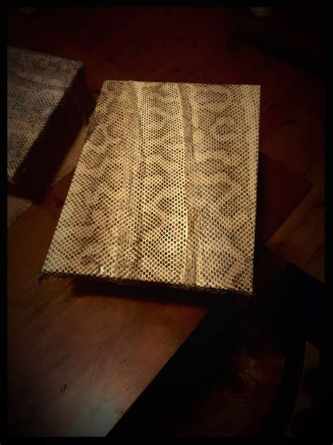 Shed Snake Skin Crafts by Using Snake Shed Skin As Art Rethink Reuse Recycle