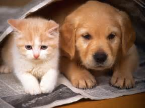 puppy cat cat and pictures favpets catbreedspic litle pups