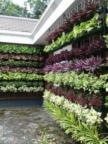 Vertical Garden by Vertical Garden At Rs 650 Square वर ट कल ग र डन