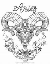 Aries Coloring Pages Adult sketch template