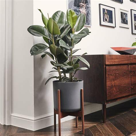 6 ต้นไม้ไซส์กะทัดรัด ช่วยเพิ่มพื้นที่สีเขียวให้ห้องน่าอยู่