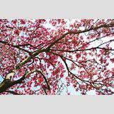 Tranquility Wallpaper   800 x 529 jpeg 244kB