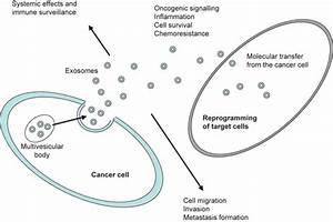Exosomes as novel biomarkers in anticancer therapy ...