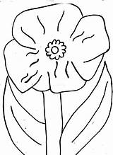 Poppy Template Colouring Coloring Poppies Printable Templates Line Remembrance Pdf Sheets California sketch template
