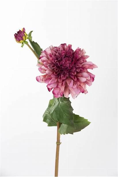 Stem Burgundy Dahlia Mauve Flower Flowers Faux