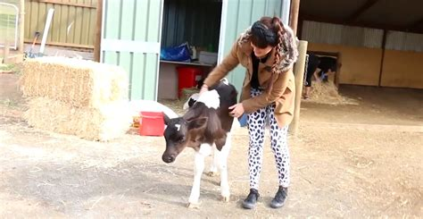 meat alternatives concerns  animal welfare