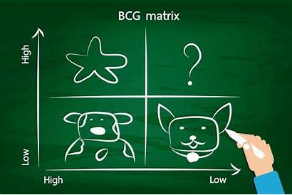 Matrix Bcg Business Examples Definition Growth Vector