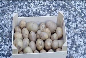 Bohnen Anbauen Anleitung : video kartoffeln vorkeimen so geht 39 s ~ Whattoseeinmadrid.com Haus und Dekorationen