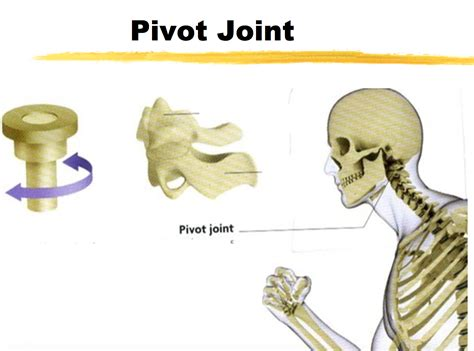Ch.1- Joints Flashcards By Proprofs