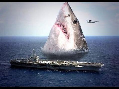megalodon sharks    evidence  suggest
