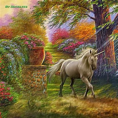 Unicorn Unicornios Reales Fairies Unicorns Hadas Unicornio
