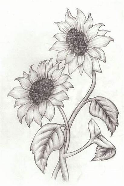 Drawing Easy Sunflowers Draw Flowers Pencil Simple