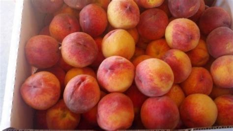 Palisade Peach Company Visit Grand Junction Colorado