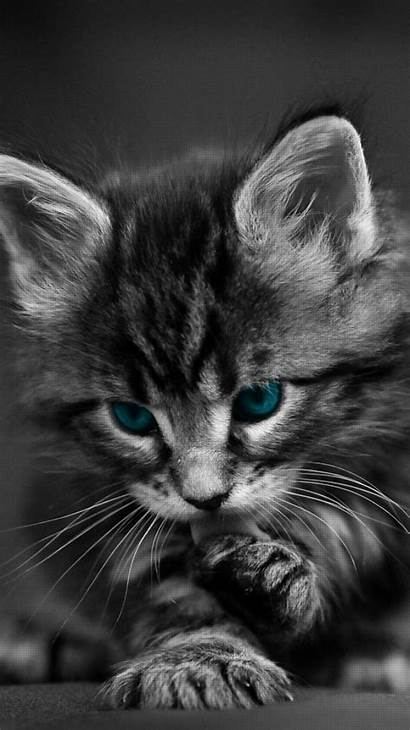 Cool Cat Wallpapers Iphone Backgrounds Wallpaperaccess Animals