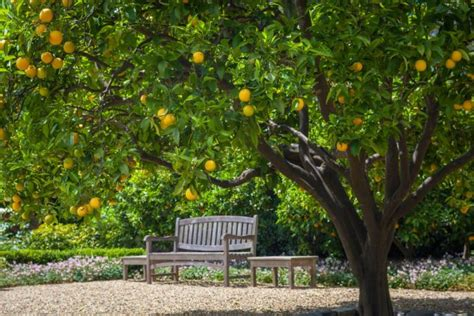 12 gardens with fruit trees for health habits top