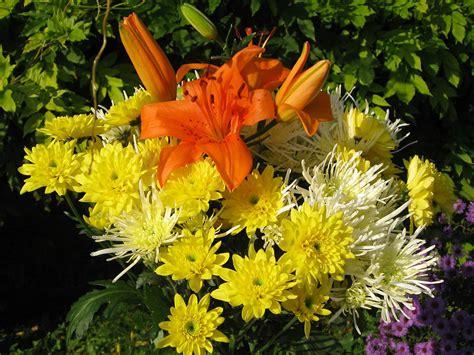 pics of flowering plants uses of flowering plants world of flowering plants