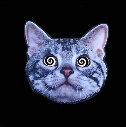 Cat Acid Trippy Lsd Trip Gifs Drug