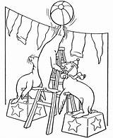 Circus Coloring Pages Animals Printable Seals Animal Sheets Colouring Clown Activity Acrobat Carnival Train Honkingdonkey Seal Performing Sheet Trained Cartoon sketch template
