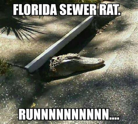 Florida Memes - image gallery sewer jokes