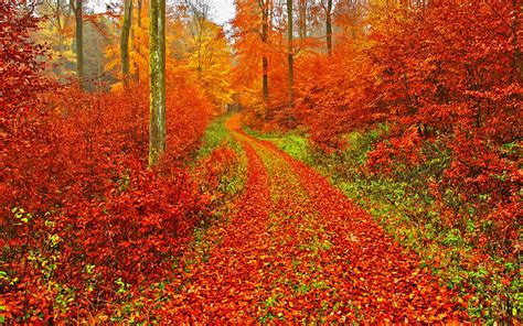 Autumn Themed Wallpapers For Android autumn wallpaper android apps on play