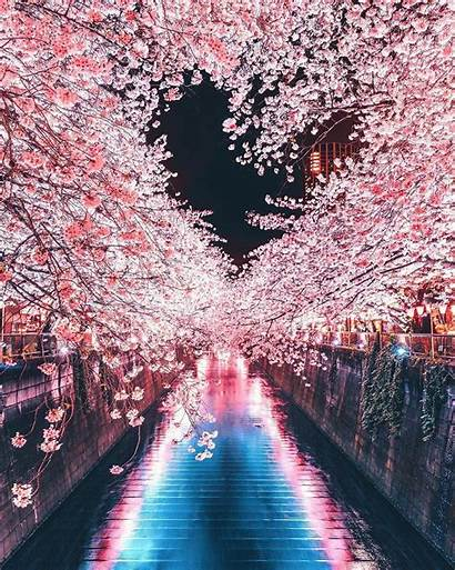 Places Tokyo Japan Nature Instagrammable Japanese Cherry