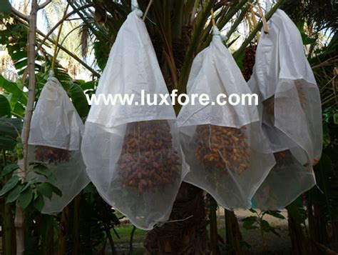 date palm packing luxfore