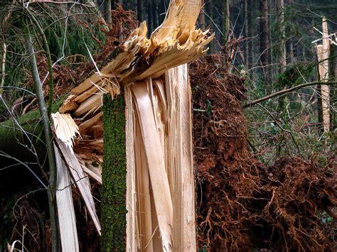 comment cintrer du bois lambourde en bois 224 quoi sert