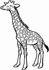 Giraffe Coloring Animals Wildlife Pattern Printable sketch template