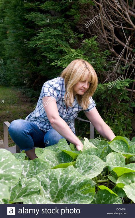 butternut kürbis pflanzen frau 220 berpr 252 fung butternut k 252 rbis pflanzen f 252 r sch 228 dlinge