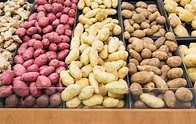 USDA okays GMO potatoes that could prevent another Great ...