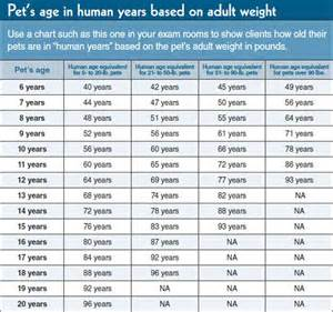 cat years compared to humans how our pets age ansley animal clinic