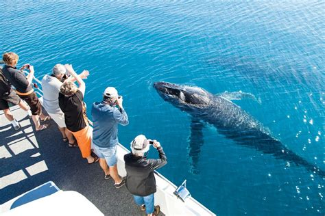 Where To Go Whale Watching In Queensland
