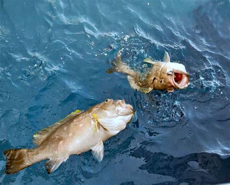 florida deep fishing drop spots grouper south snowy fish caught bottom keys types water flfishingspots maps