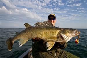 Lake Mille Lacs Walleye